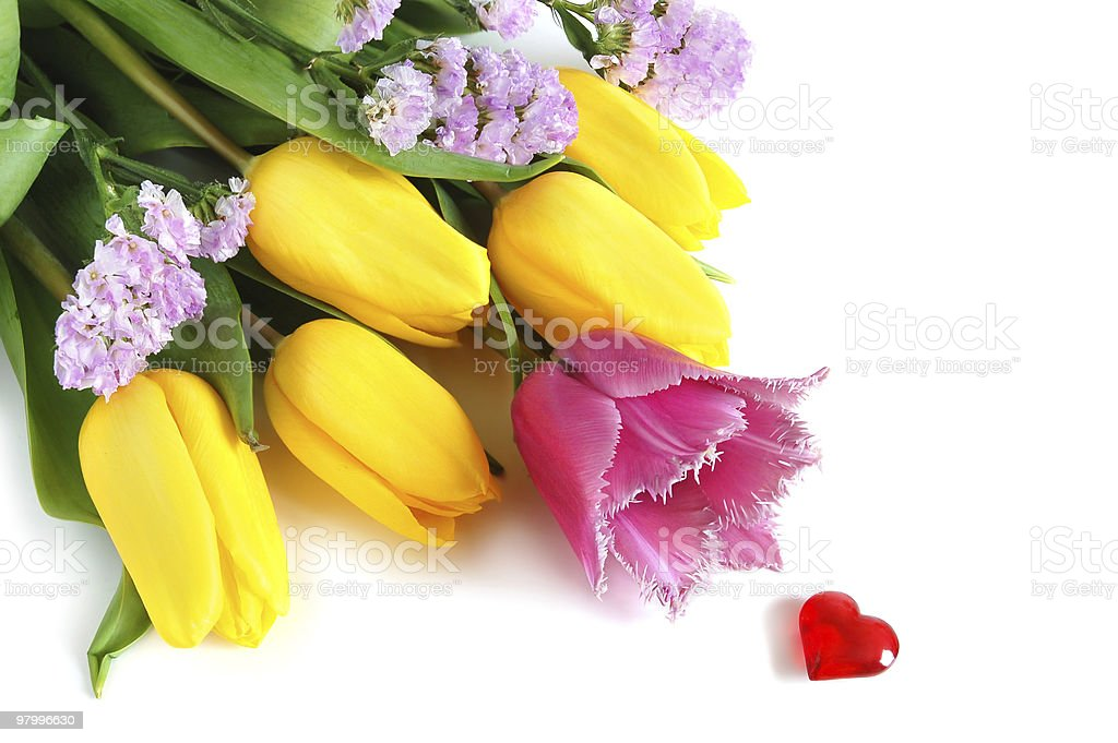 Colored tulips royalty-free stock photo