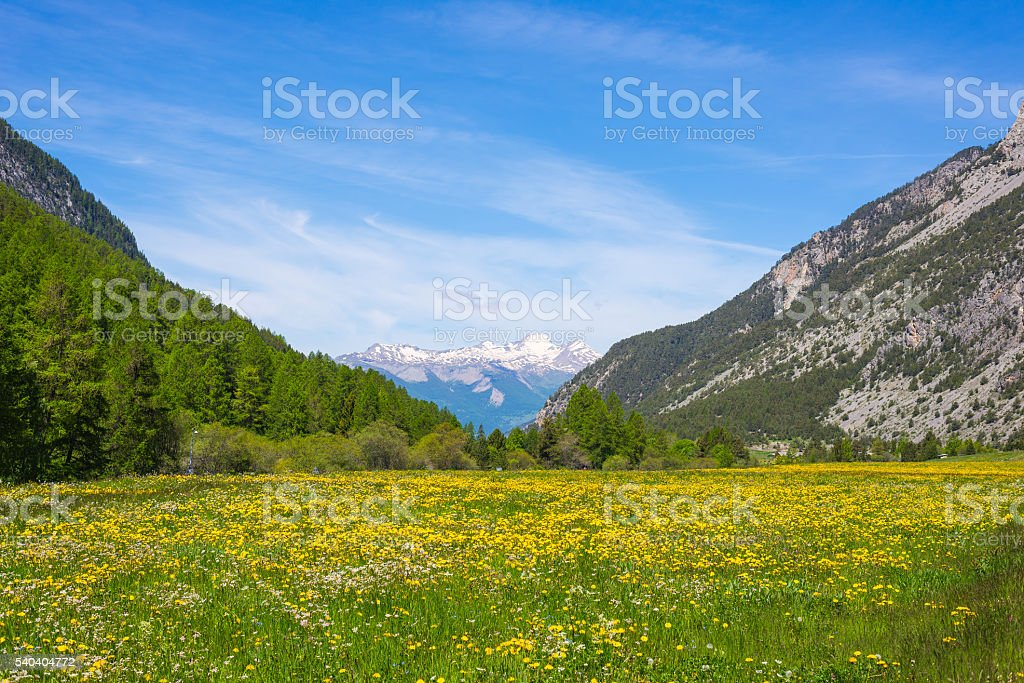Colorful alpine meadows and snowcapped mountain range stock photo