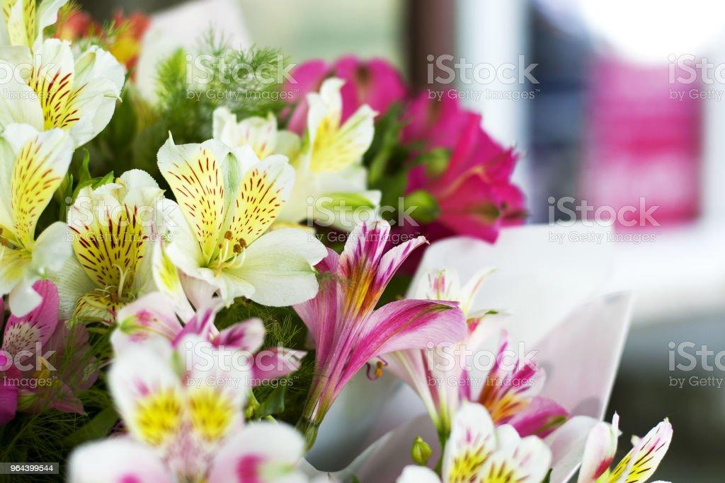 Flores coloridas de Alstroemeria. Um grande buquê de alstroemerias coloridas na loja de flores são vendidos sob a forma de uma caixa de presente. - Foto de stock de Alstromeria royalty-free
