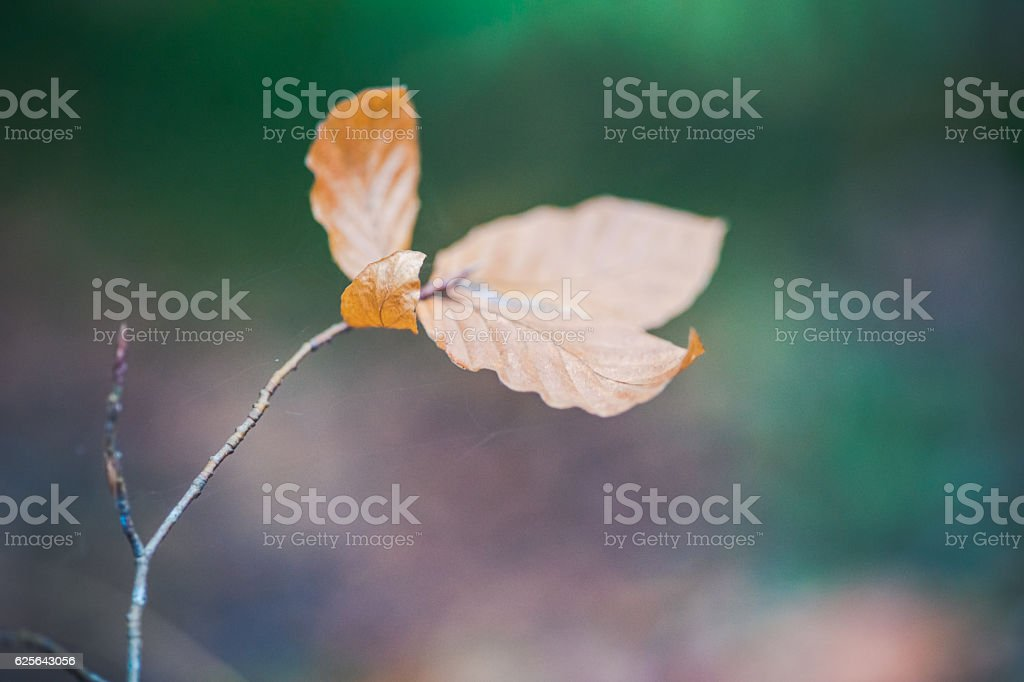 Colorful and bright background made of autumn leaves stock photo