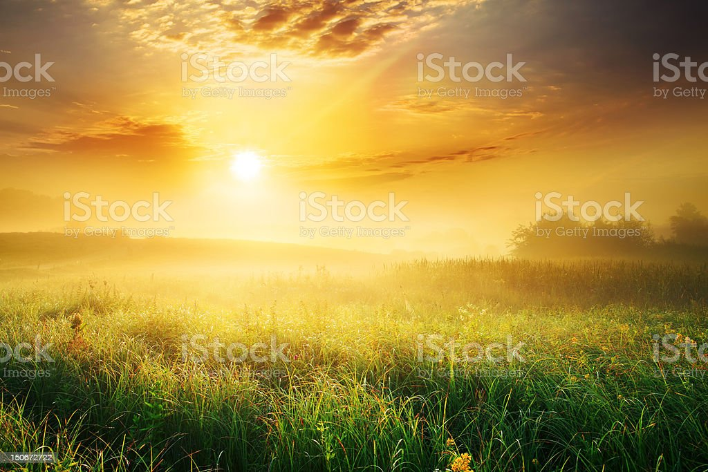 Colorful and Foggy Sunrise over Grassy Meadow - Landscape - Royalty-free Agricultural Field Stock Photo