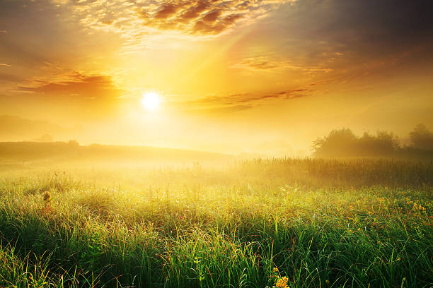 Colorful and Foggy Sunrise over Grassy Meadow - Landscape stock photo
