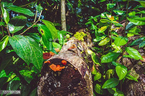 A log with vibrant colored fungus and lush foliage