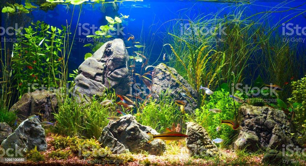 Colorful Aquarium In Home Interior Stock Photo Download Image Now Istock