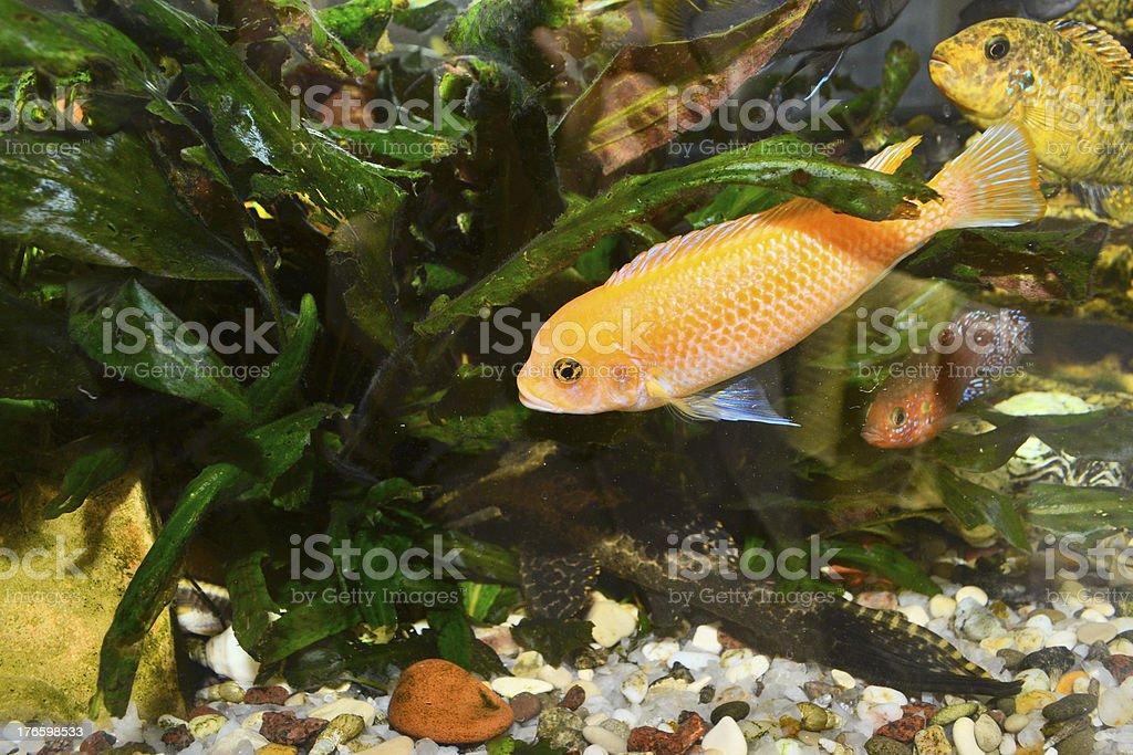 Colorful aquarium with fish royalty-free stock photo