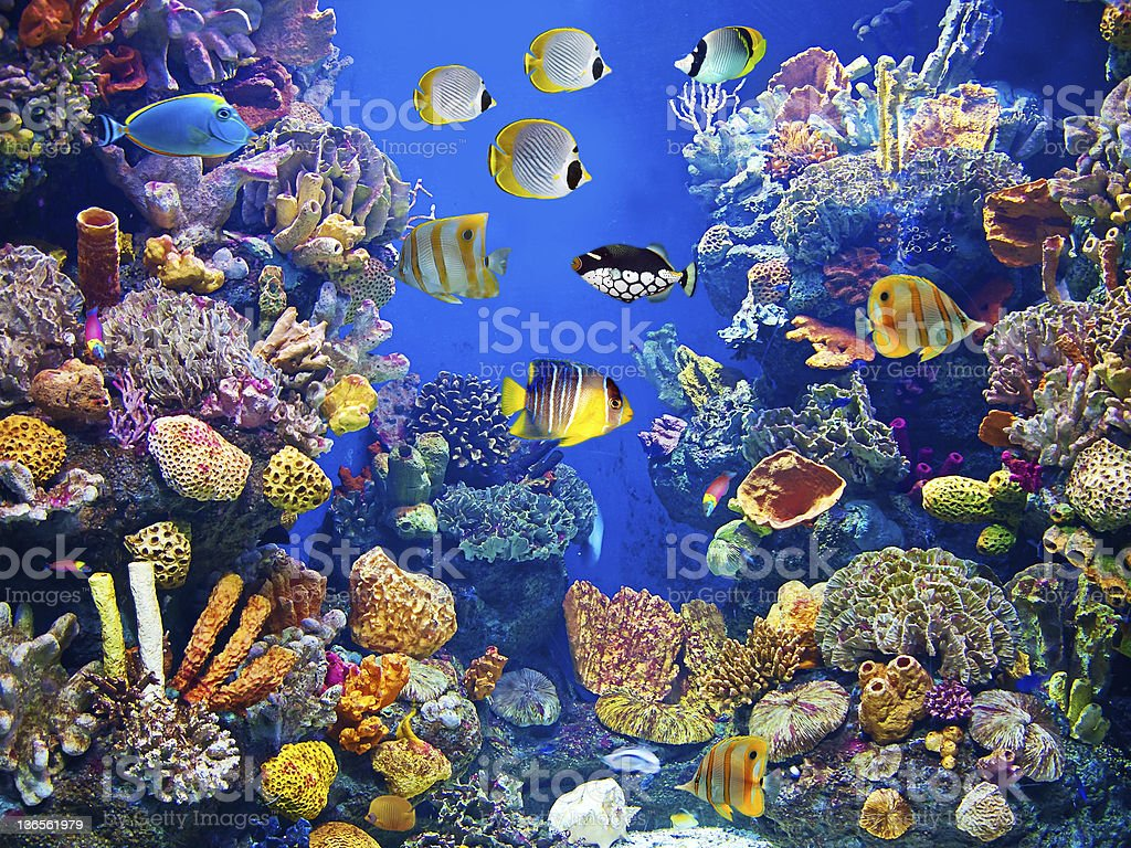 Colorful aquarium with fishes stock photo