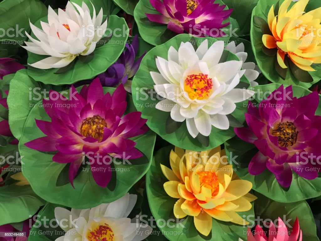 Colorful Artificial Lotus Flower Stock Photo More Pictures Of