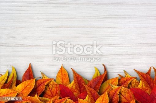 Dried leaves on a white clean wood board. The leaves colored in yellow, orange and red are piled on making a line in the bottom of the photo. White wooden background is new and clean. It has a clear texture of wood. A wood grain pattern featuring even grains of wood running horizontally across the image.