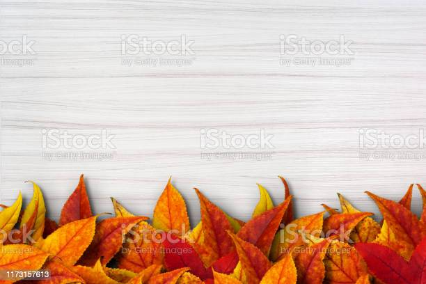 Photo of Colorful autimn leaves on white wooden background