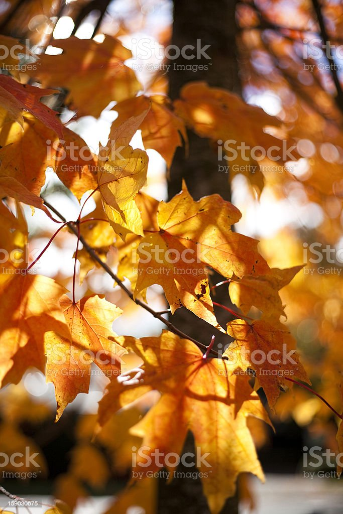 Colorful Autum Leafs royalty-free stock photo