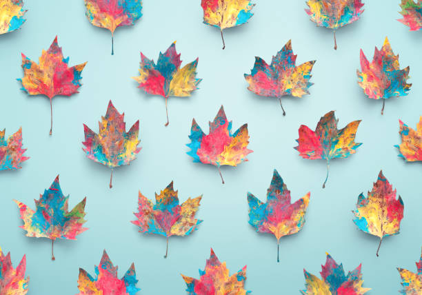 Colorful Autumn Background Colorful maple leavesagainst blue background. maple leaf photos stock pictures, royalty-free photos & images