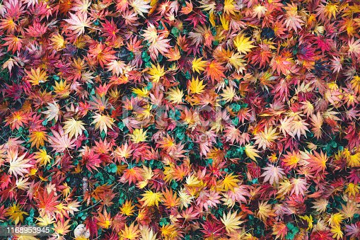 View from above on colorful autumn leaves lying on the ground.
