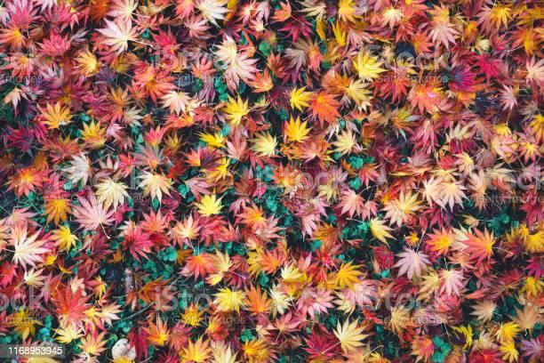 Photo of Colorful Autumn Carpet