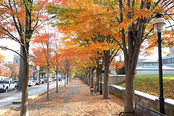 Colorful Autumn cross the street stock photo