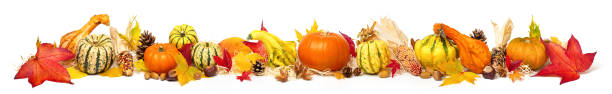 Colorful autumn decoration, extra wide format stock photo
