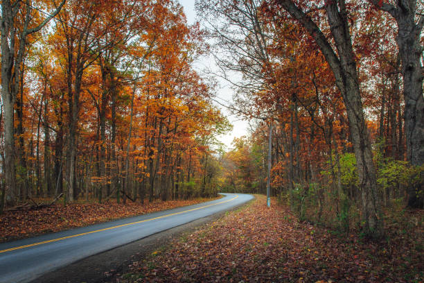 Colorful Autumn Drive stock photo