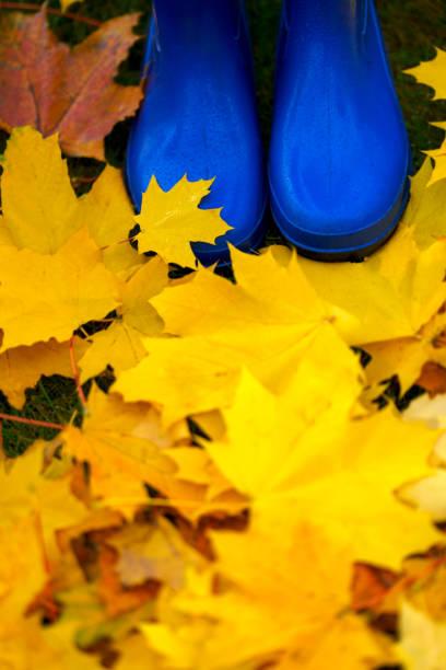 Colorful autumn foliage and blue rain boots stock photo