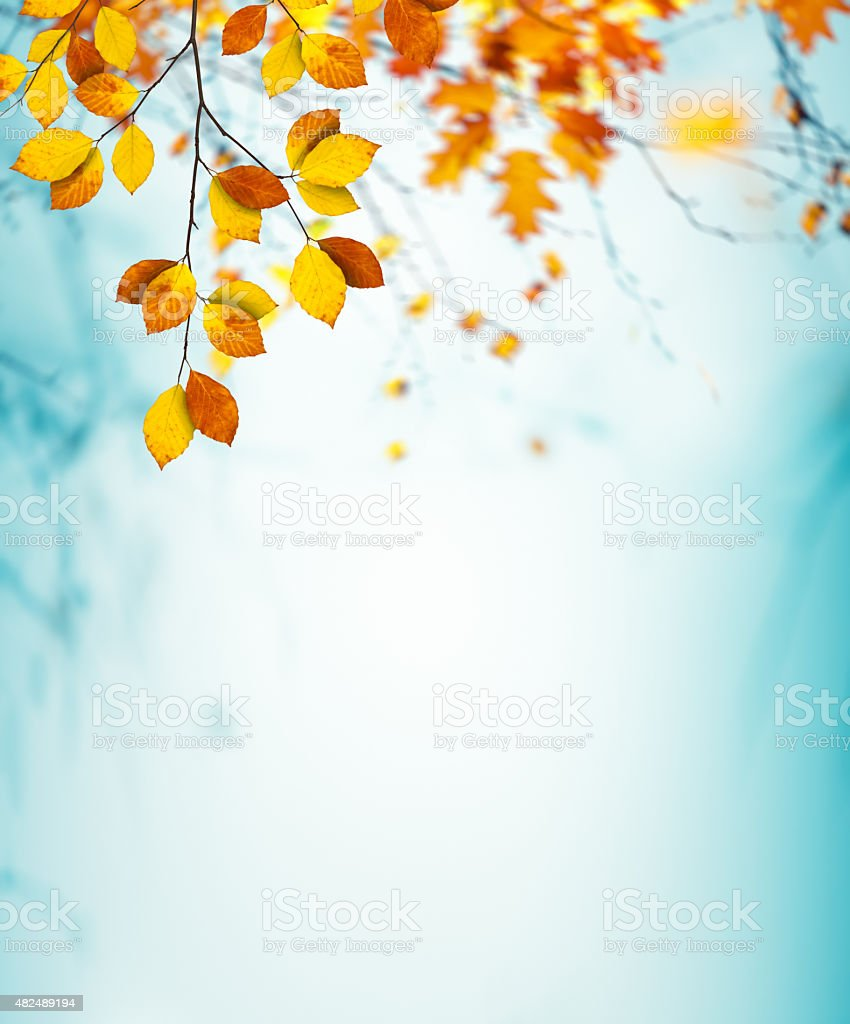 Colorful Autumn Foliage stock photo