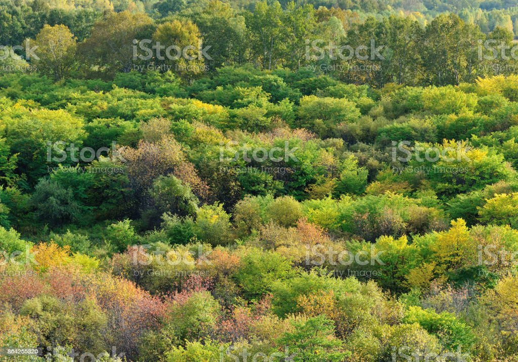 colorful autumn forest landscape royalty-free stock photo