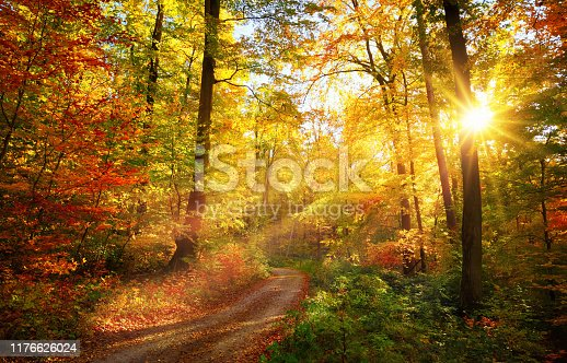 Colorful autumn landscape with a path lit by the sun shining through the foliage
