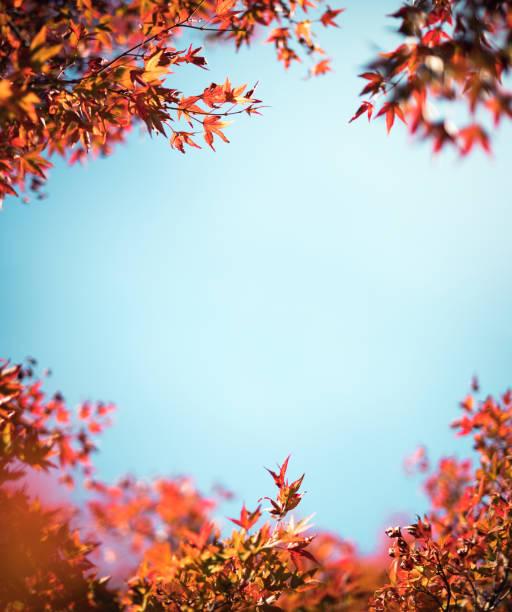 Cadre coloré de l'automne - Photo