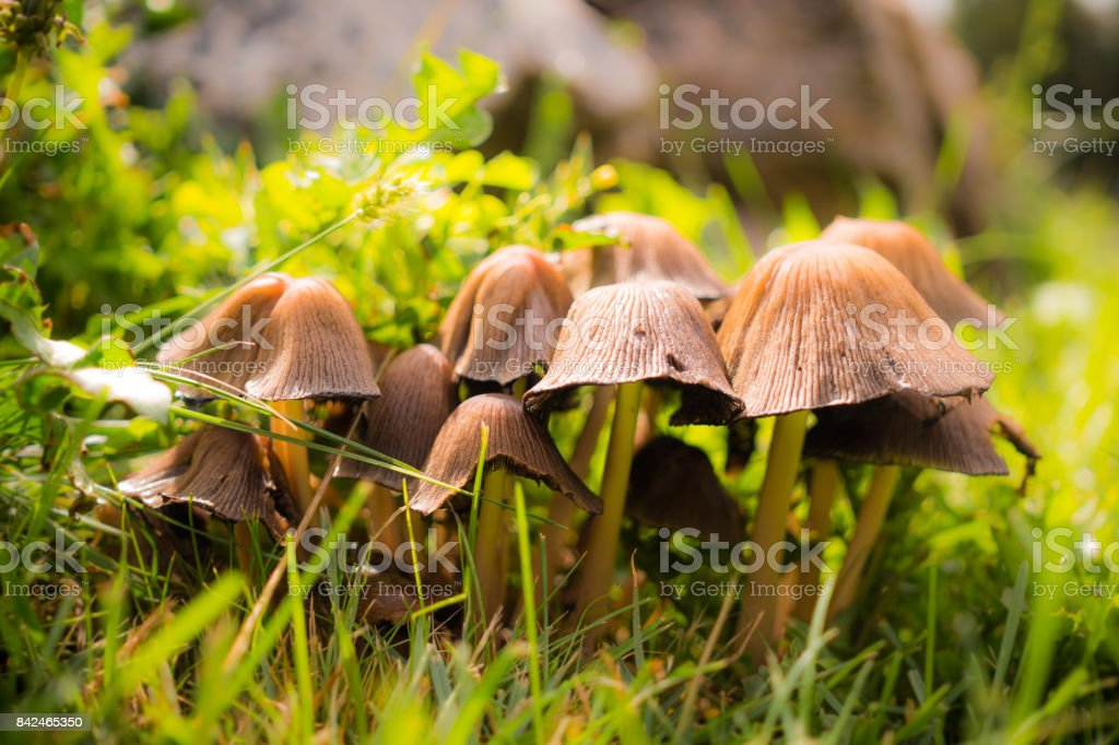 Colorful autumn garden. Picturesque foothills and green lawn stock photo