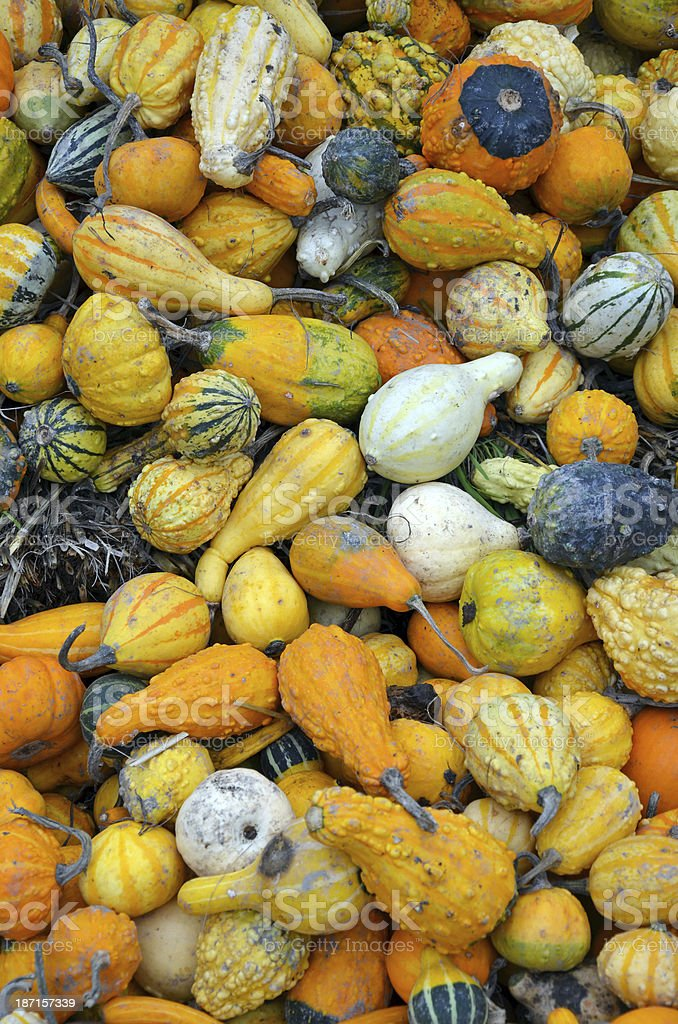Colorful autumn gourds royalty-free stock photo