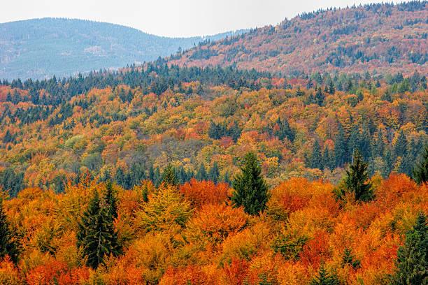 colorful autumn in bavarian forest - bayerischer wald bildbanksfoton och bilder
