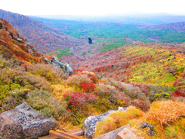 colorful autumn in halla moutain - jeju island stock photos and pictures