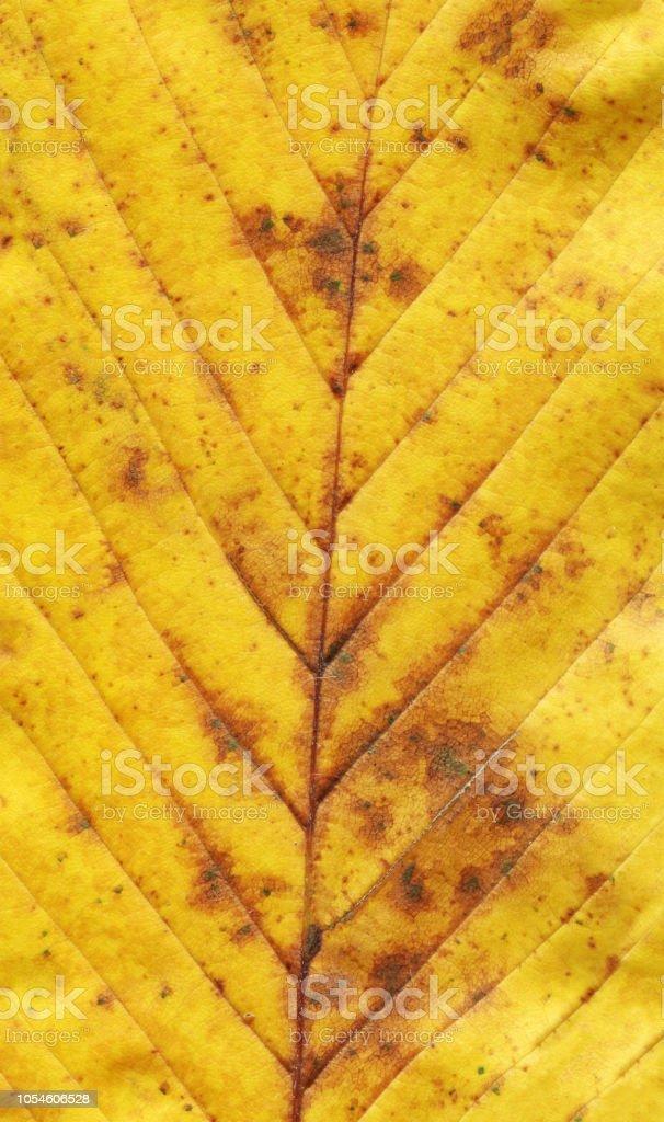 Colorful autumn leaf background stock photo