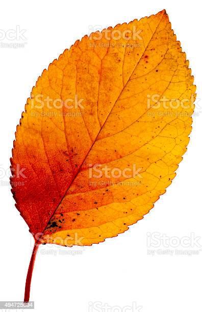 Photo of Colorful autumn leave