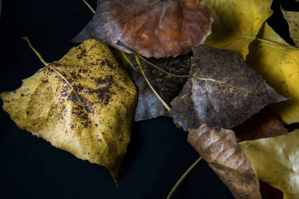 Colorful Autumn leaves against a black background stock photo