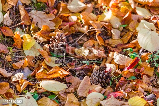 istock colorful autumn leaves and pine cones on the forest floor 1172810482