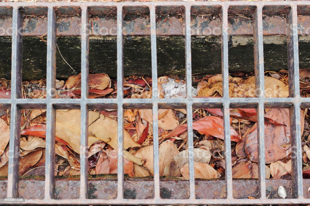 colorful autumn leaves collecting at the drain on the road stock photo