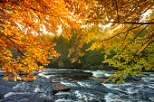 Fall season leaves in the forest by the creek in Algonquin Provincial Park in Ontario Canada