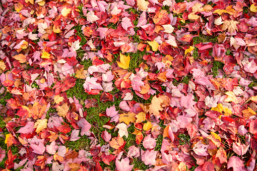 Colorful Autumn Leaves From Above