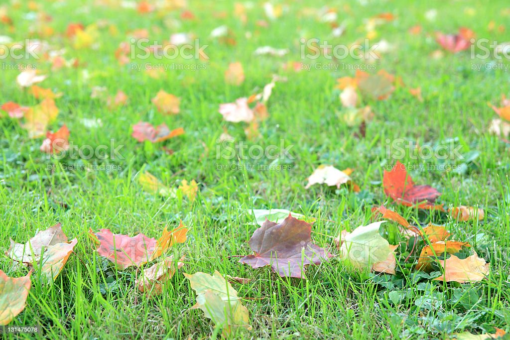 Colorful autumn leaves lying on the grass. stock photo