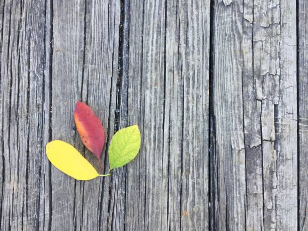 Colorful autumn leaves on a wooden deck stock photo