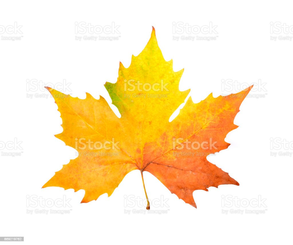 Colorful autumn leaves on an isolated stock photo