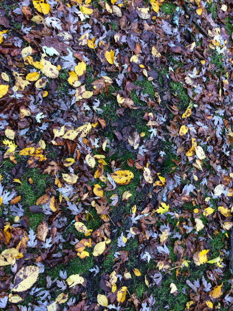 IMG_1957 Colorful autumn leaves on ground ©2019 Paul Light stock photo