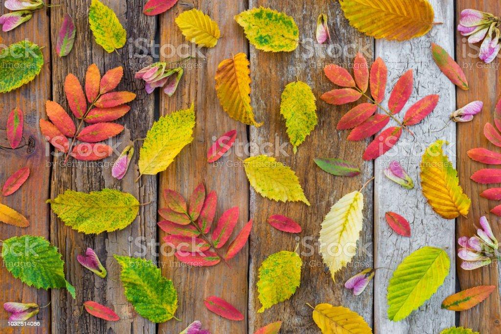 Folhas de outono coloridas no antigo fundo de madeira rústica - foto de acervo