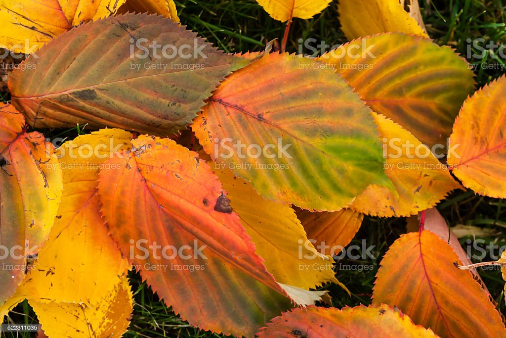 Colorful autumn leaves on the ground stock photo