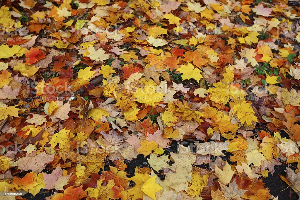 Colorful Autumn Leaves royalty-free stock photo