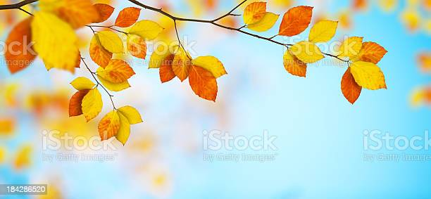Photo of Colorful Autumn Leaves