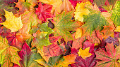 Colorful autumn leaves.