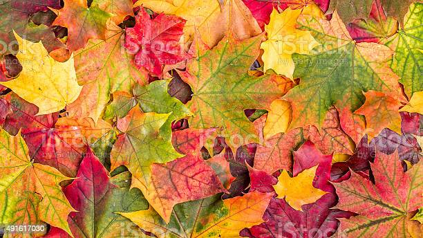 Photo of Colorful autumn leaves.