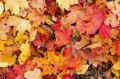 カラフルな秋の葉