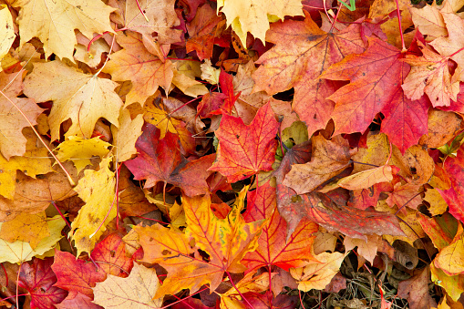 Colorful Autumn Leaves Stock Photo - Download Image Now