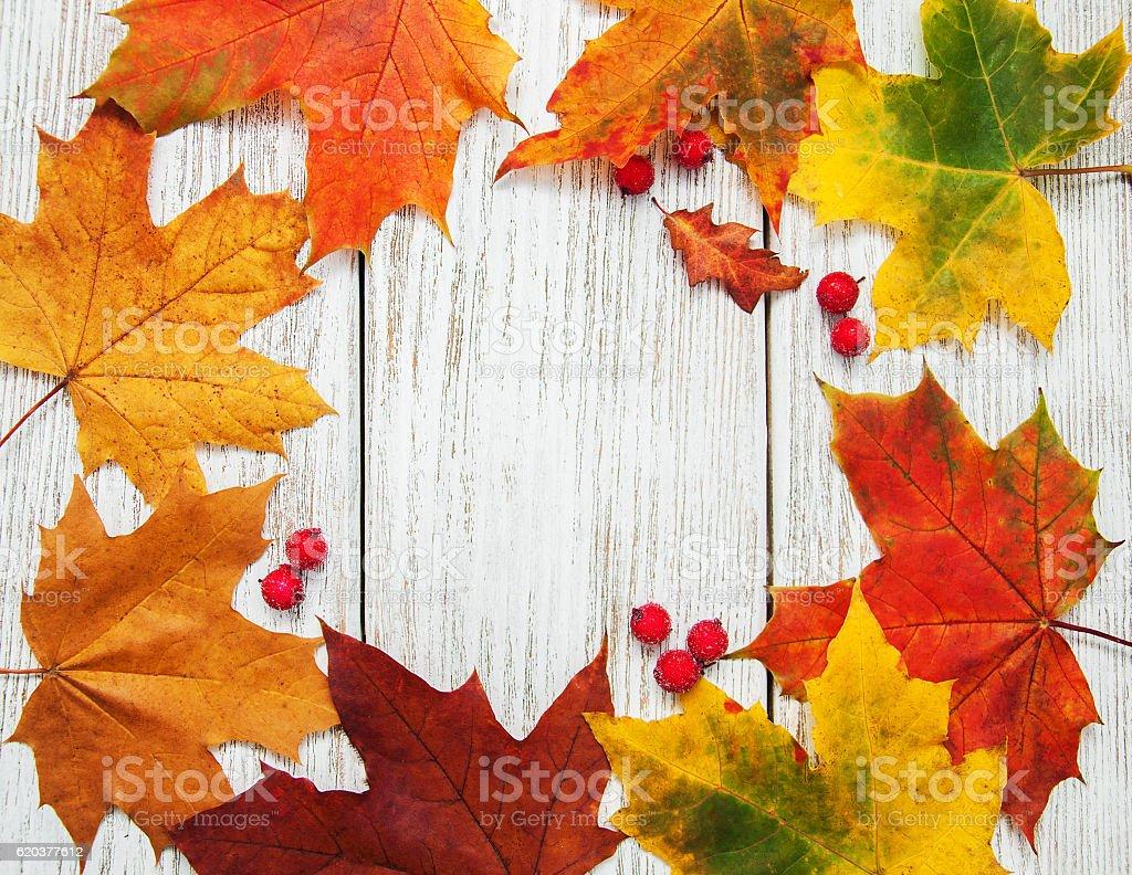 Na jesień liście  zbiór zdjęć royalty-free