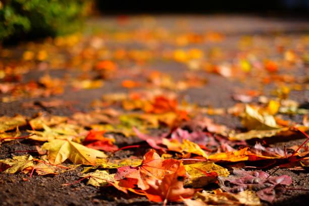 낙엽 색상화 추절  스톡 사진